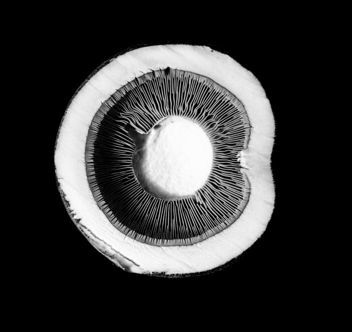 Sliced Mushroom - Food Photography - Giovanni Barsanti